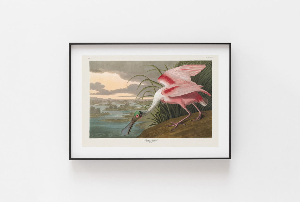 Audubon Framed Painging