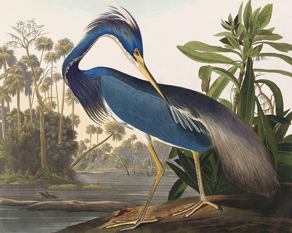 Heritage Prints is a Fine Art Studio that focuses on historic giclée prints. Complete set Birds of America - John James Audubon