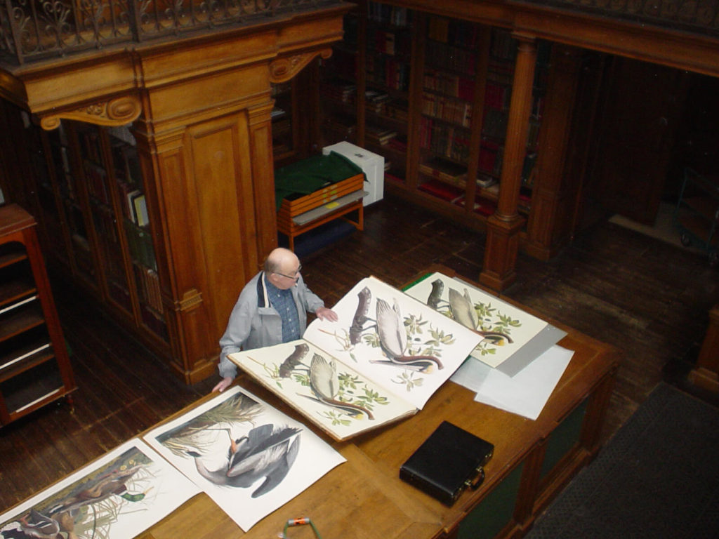 Heritage Prints Birds of America Audubon in Teylers Museum The Netherlands Gies Pluim