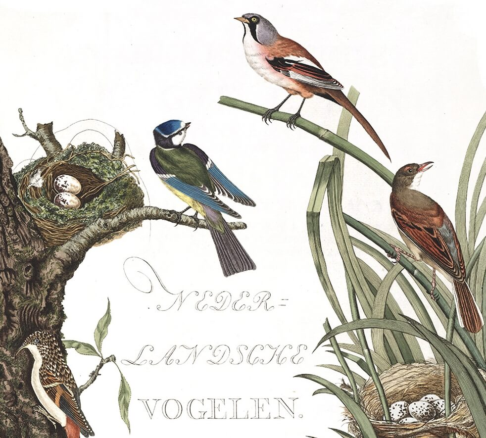 Nozeman Nederlandsche Vogelen Dutch Birds Cover - Museum quality giclee prints