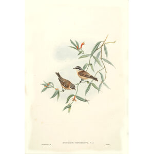 John Gould - Birds of Asia Volume 2 Museum quality giclee print