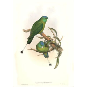 John Gould - Birds of Asia Volume 6 - Museum quality giclee print