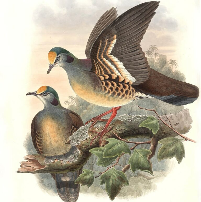 John Gould Complete Set Birds of Asia Volume 6 - Museum quality giclee print