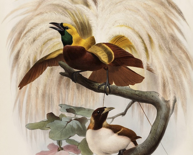Heritage Prints is a Fine Art Studio that focuses on historic giclée prints. Complete set Birds of Paradise - Daniel Giraud Elliot