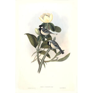John Gould - Birds of Asia Volume 2 - Museum quality giclee prints