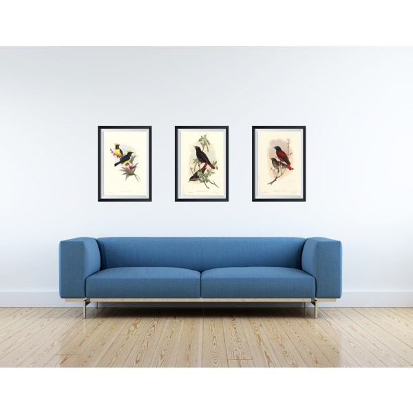 Gould Set Birds of Asia Vol 2. Giclée Prints. Sultan Tit. Maroon Oriole. Red Oriole.