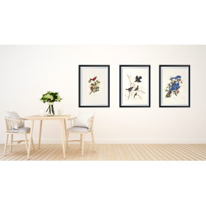 Audubon Small Set Birds - Giclée Prints - Heritage Prints