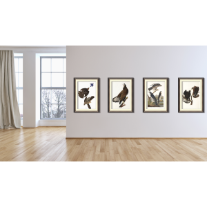 Set Audubon Birds of Prey Giclée Prints Heritage Prints