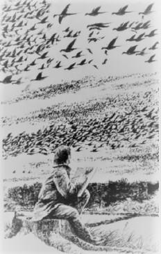Passenger Pigeon Audubon making notes