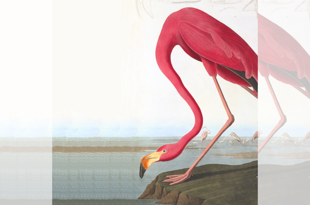 Heritage Prints 20% DISCOUNT on all AUDUBON giclée prints