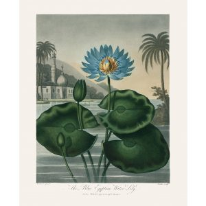 The Blue Egyptian Water Lily by Robert Thornton – Temple of Flora, or Garden of Nature – Museum Quality Giclee Print – Heritage Prints Facsimile