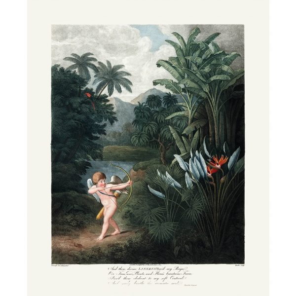 Cupid Inspiring the Plants with Love by Robert Thornton – Temple of Flora, or Garden of Nature – Museum Quality Giclee Print – Heritage Prints Facsimile