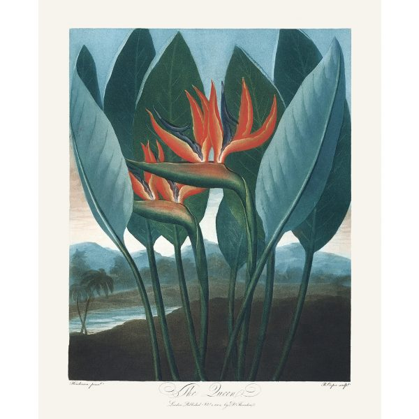 The Queen by Robert Thornton – Temple of Flora, or Garden of Nature – Museum Quality Giclee Print – Heritage Prints Facsimile