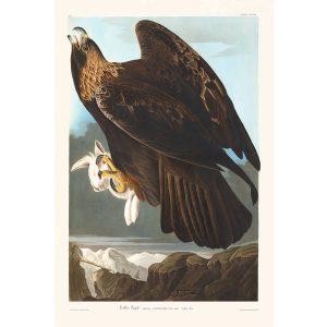 John James Audubon Birds of America Plate 181 Golden Eagle Giclée Print