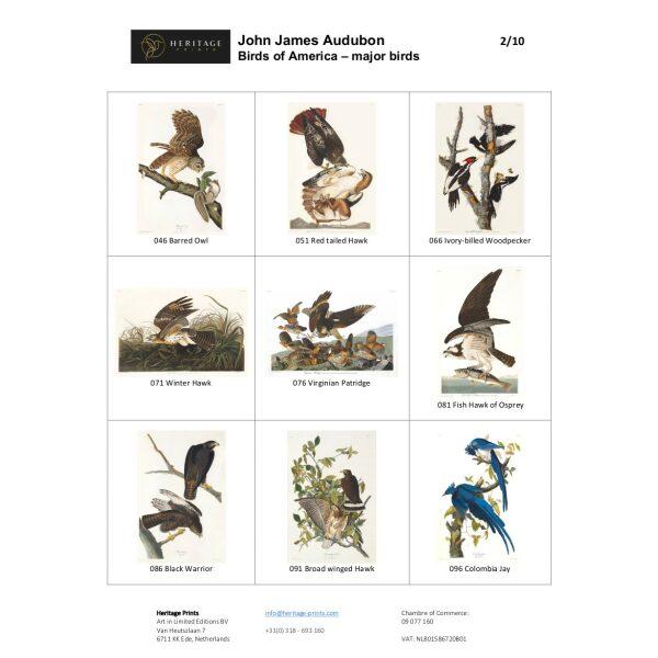 Audubon Marjor Birds - Birds of America - DEF fasimile giclee print