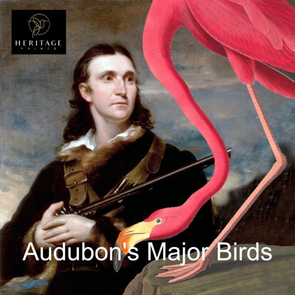 John James Audubon Birds of America Major Birds Heritage Prints
