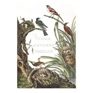 Title Page by Cornelius Nozeman. Nederlandsche Vogelen or Dutch Birds. Museum quality Facsimile giclee print. Certificate of authenticity included. Limited edition.