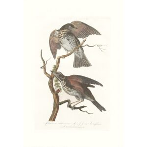 Koperwiek by Cornelius Nozeman. Nederlandsche Vogelen or Dutch Birds. Museum quality Facsimile giclee print. Certificate of authenticity included. Limited edition.