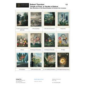 Robert Thornton Temple of Flora Overview 1/3