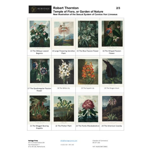 Robert Thornton Temple of Flora Overview 2/3