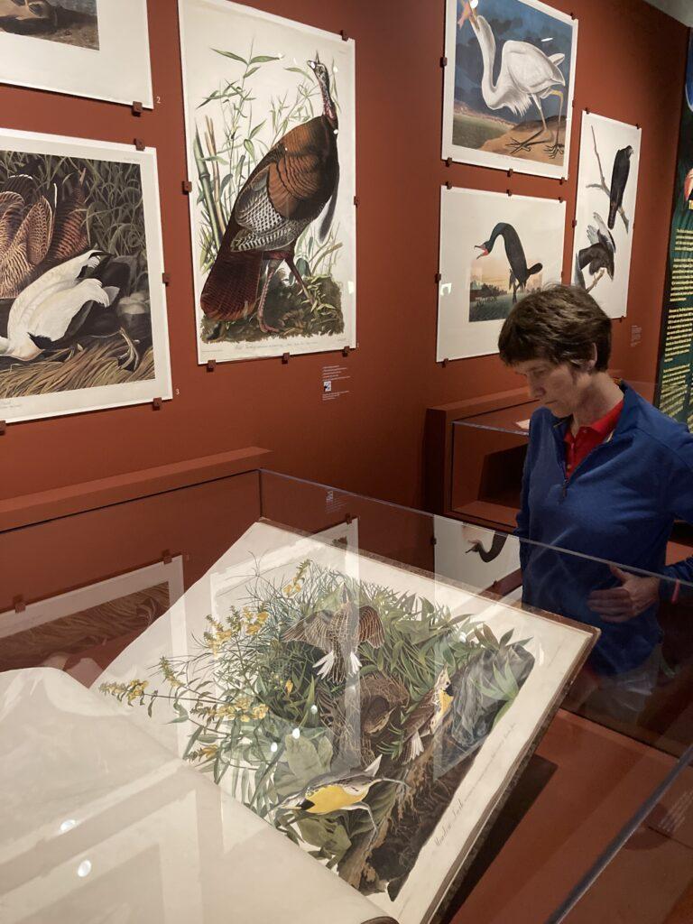 Original Audubon's Birds of America in Teylers Museum