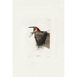 John James Audubon Birds of America Plate 173 Barn Swallow Giclée Print