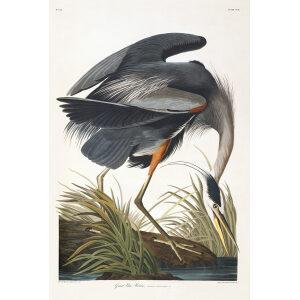 John James Audubon Birds of America Plate 221 Great Blue Heron Giclée Print