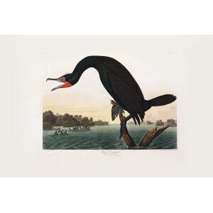 John James Audubon Birds of America Plate 252 Florida Cormorant Giclée Print