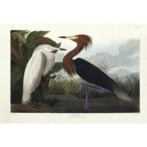 John James Audubon Birds of America Plate 256 Purple Heron and Redddish Egret Giclée Print