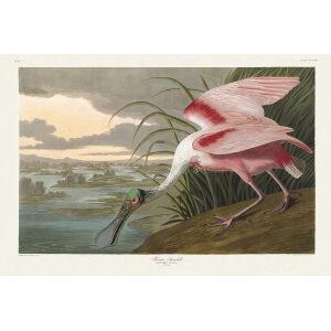 John James Audubon Birds of America Plate 321 Spoonbill Giclée Print